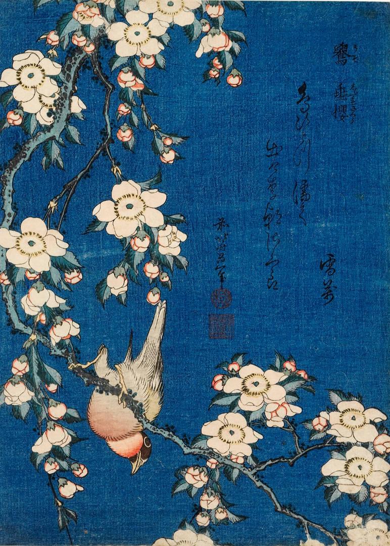 Katsushika Hokusai, Cardellino e ciliegio piangente