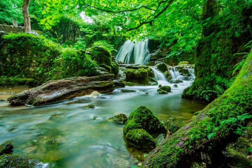 foresta-amazzonica-corte-colombiana-