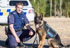 cane-poliziotto-accoltellato-alla-gola-e-salvato-dalla-trasfusione-di-un-collega