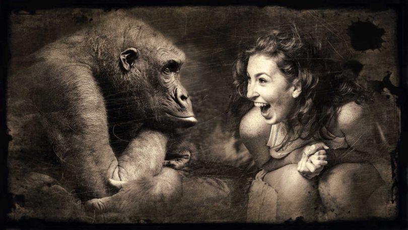 le scimmie possono comunicare con gli uomini, lo dice la scienza