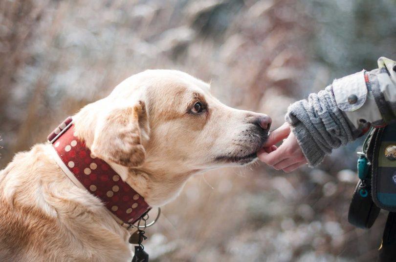 donna-in-coma-reagisce-positivamente-alla-pet-therapy