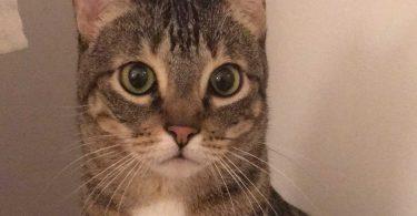 il-gatto-scappa-nellaeroporto-e-non-si-fa-prendere-per-una-settimana