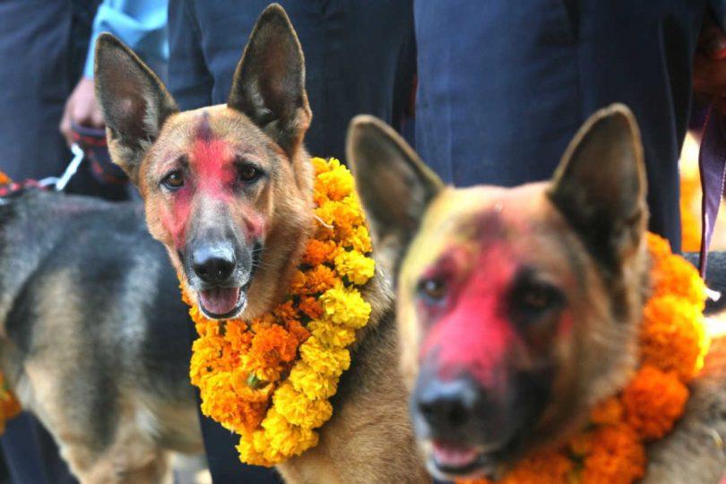 in-nepal-il-kukur-thiar-un-festival-in-onore-dei-cani