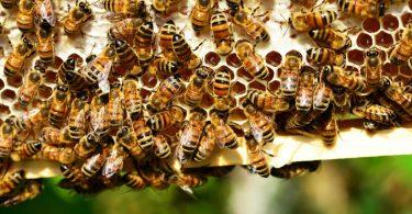 leuropa-bandisce-i-pesticidi-per-salvare-le-api