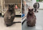 bruno-il-gatto-che-pesa-11-kg-e-stato-adottato-Foto-facebook-wright-way-rescue