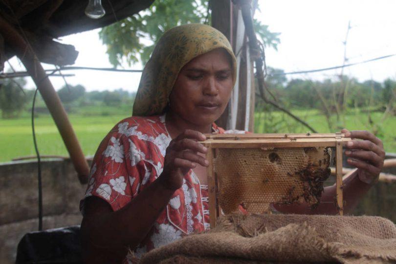 """La Rivoluzione delle api, di Monica Pelliccia e Adelina Zarlenga, è un libro inchiesta su come salvare l'alimentazione e l'agricoltura nel mondo. Edito da Nutrimenti,vanta la prefazione di Vandana Shiva. Con il progetto Hunger for Bees, da cui nasce questo libro, Monica Pelliccia e Adelina Zarlenga, giornaliste, con la fotografa Daniela Frechero, hanno vinto il Premio internazionale di Giornalismo, 'Innovation in development reporting', gestito dal Centro europeo di Giornalismo. Lo scriveva anche Tolstoj che non nascondeva affatto la sua ammirazione per l'apicoltura. """"Ammirava a tal punto il regno delle api tanto da erigerlo a emblema della perfetta organizzazione sociale."""" Si legge così nell'apertura della Rivoluzione della api. Un libro che è un viaggio lungo, un'inchiesta al di là e al di qua del continente. Sono storie di donne e uomini che si intrecciano e che dimostrano passione per la meticolosa operosità di questi piccoli insetti a righe. Adelina e Monica hanno unito i fili, hanno seguito le orme di apicoltrici, contadini e scienziate. Sono le storie di chi ancora si batte per il futuro delle api e poi dell'ambiente e del cibo, di chi riconosce e vuole dimostrare il loro valore immenso. E allora quanto contano per noi le api? Pochi lo sanno, eppure le api sono responsabili del 75% di ciò che arriva sulle nostre tavole. Senza di loro i nostri piatti sarebbero vuoti.È l'impollinazione, l'effetto della loro attività bottinatrice a contribuire alla nascita di piante, ortaggi. Senza api, le carote non sarebbero di color arancione vivo, non avrebbero nessun sapore. Il mango che coltiva Neema, contadina del villaggio di Kevdipada, grazie all'impollinazione della api è più rotondo, più saporito. E poi la produzione di fragole a Dublino, di mele a Sheffield, di peperoncini a Milano, non potrebbe essere portata a termine. Senza il loro ronzio sarebbero gravi le ripercussioni sulla salute e sulla nutrizione per mancanza di micronutrienti. Eppure è una grande famiglia a"""