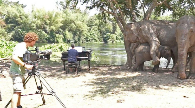 paul-barton-suona-per-gli-elefanti-ciechi