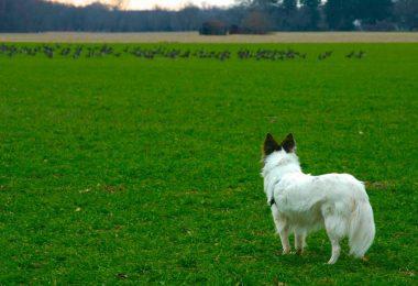 Il cane è il miglior amico dell'uomo da oltre 9000 anni