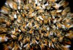 Apepak, la pellicola d'api per dire no alla plastica