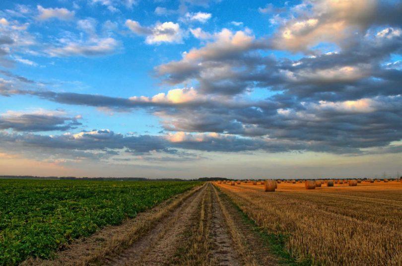 Colture, l'importanza di un'agricoltura sociale