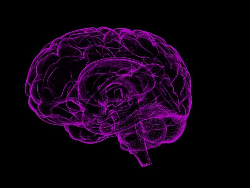 BrainNet: Cervelli interconnessi per condividere i pensieri