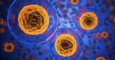 Riprogrammare le cellule della pelle contro il cancro