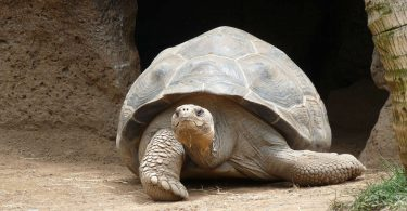 Jonathan: la tartaruga più anziana del mondo