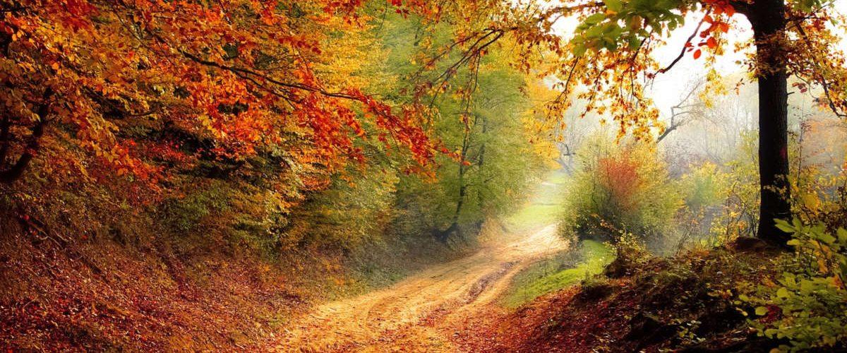 gli ambienti naturali fanno bene alla salute