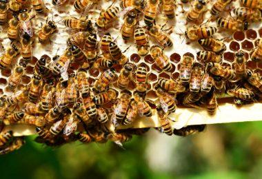 Le api riconoscono lo zero