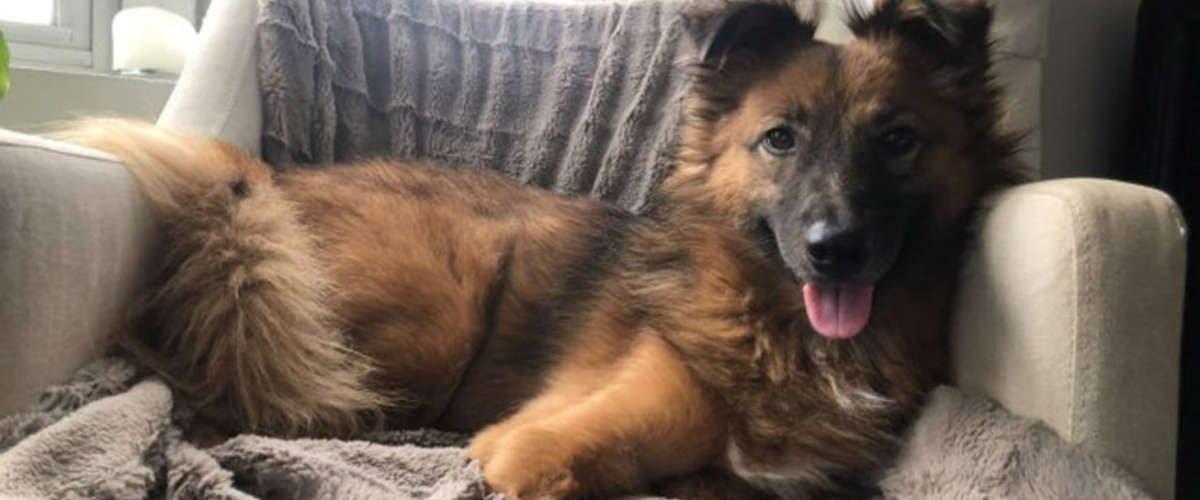 Il cane True e la sua rinascita dopo una storia di violenza