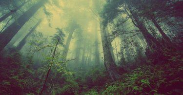 L'India pianta 6 milioni di alberi per salvare il pianeta