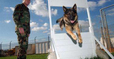 L'ENPA a favore dei cani militari in pensione