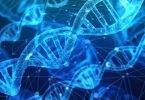 Nuove proteine avanzano la rigenerazione degli arti