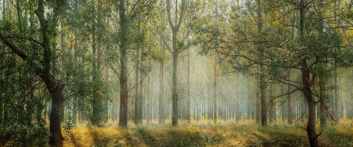 Progetto Ossigeno: 6 milioni di alberi in tre anni