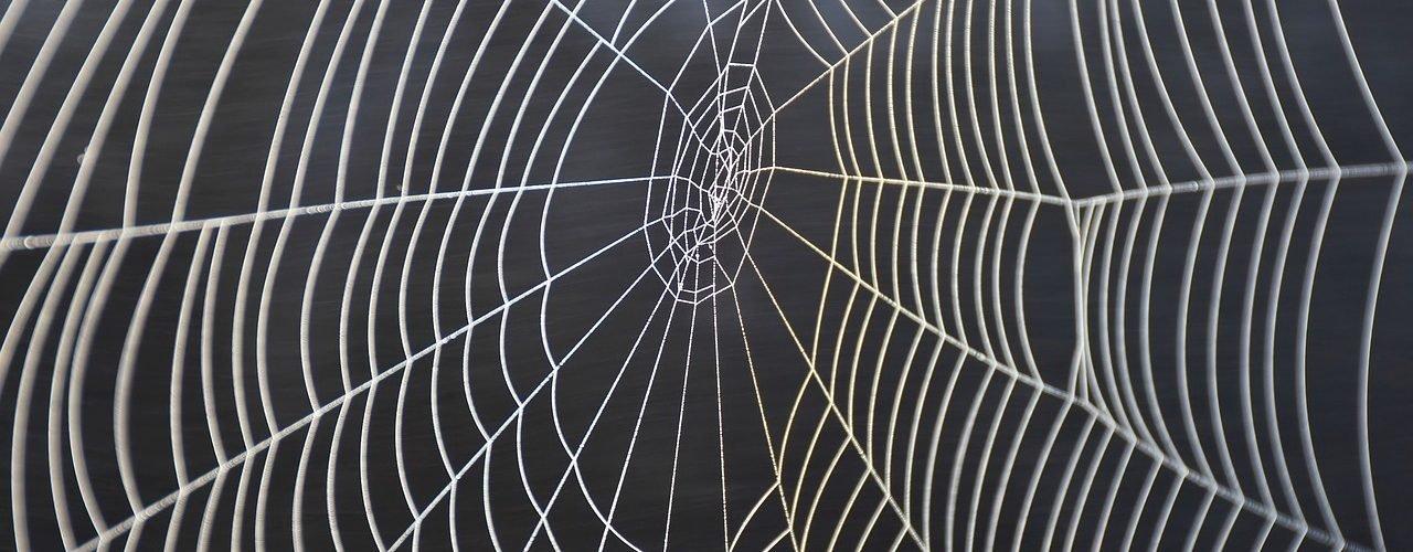 Batteri geneticamente modificati nei ragni producono ragnatele più forti