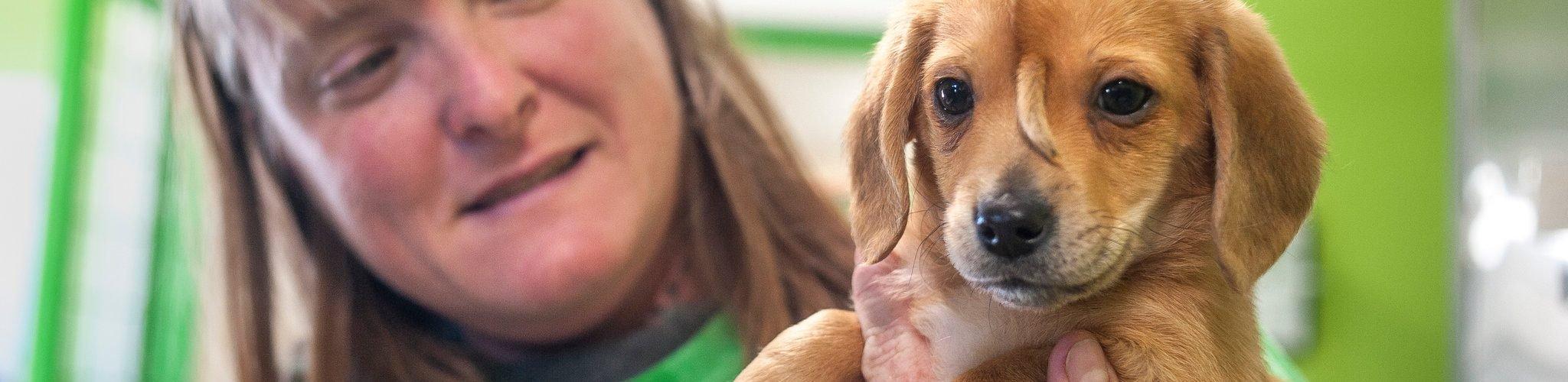 Narwhal, il cane con una coda in più sulla fronte