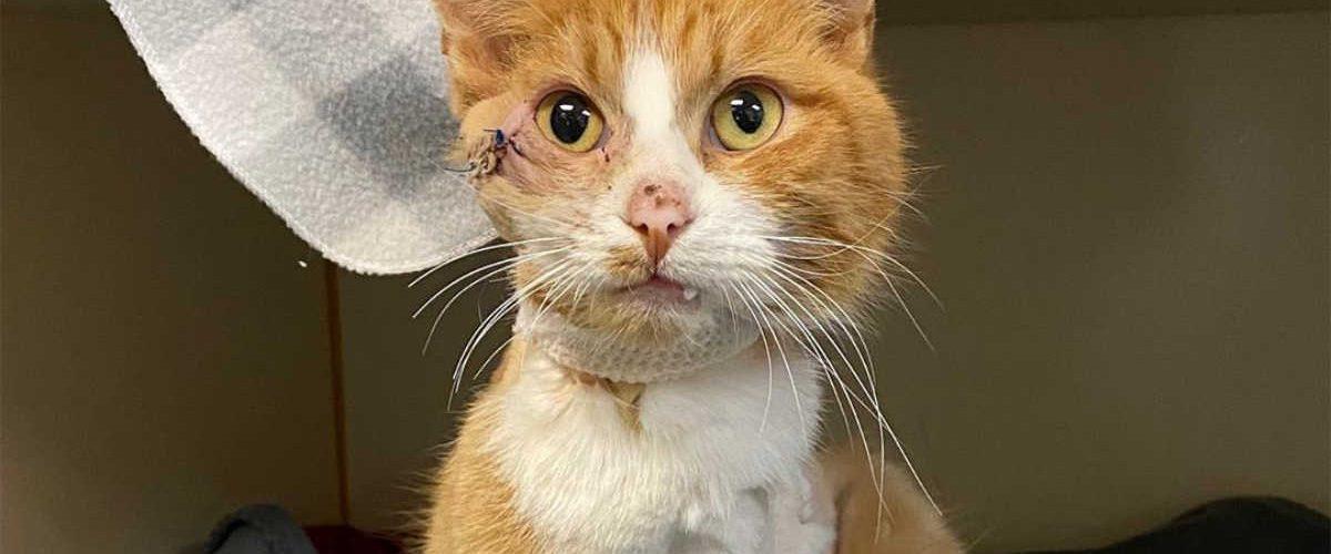 L'incredibile storia del gatto Cupido